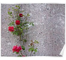 Red Roses On Grey Poster