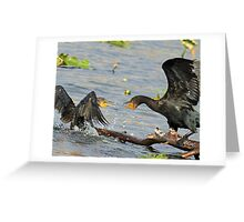 Squabbling cormorants Greeting Card