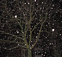 Falling Snow - Night Scene by BlueMoonRose