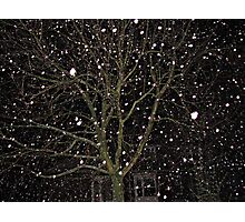 Falling Snow - Night Scene Photographic Print