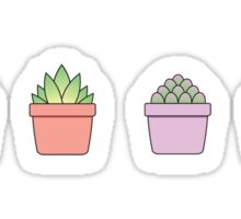 Baby Succulents Sticker