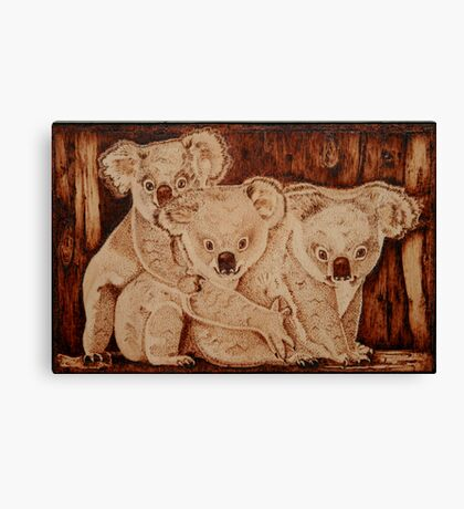 Three Baby Koalas Canvas Print