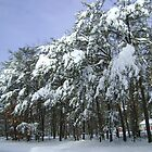 Snowy in the Pines by DeWolf