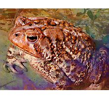 Freaky Frog Photographic Print