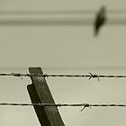 To be - Free as a bird by iamelmana