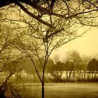 Frozen Lagoon © by Dawn M. Becker