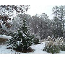White Christmas, I Am Dreaming Photographic Print