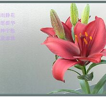not a winter rose but a summer lily by LisaBeth
