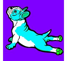 Boston Bull Terrier Puppy Blue Photographic Print