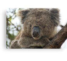 Cuddly Koala Canvas Print