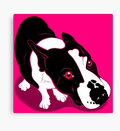 Mr Bull Terrier Pink Canvas Print