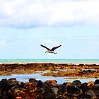 Fly by Seagull... by Kate Caston