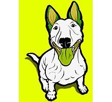 Lola Lugs Bull Terrier  Photographic Print