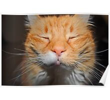 Even Cats Close Their Eyes When Having Their Picture Taken Poster