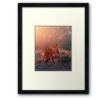 Searching For Cubs Framed Print