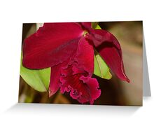 the crimson Orchid Greeting Card