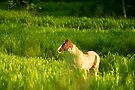 horse in a grass field at sunrise by Flux Photography