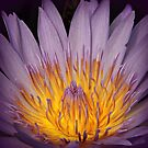 Something purple by Karen Tregoning