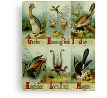 Grebe, Hummingbirds, Jay, Kingfisher, Lyre Bird, and Magpie Colorful Victorian-era Illustration: Picture Alphabet of Birds, 1874 Canvas Print