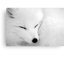 asleep Canvas Print