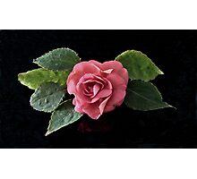Miniature Rose Photographic Print