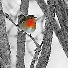 Robin,the colourful guest by Alan Mattison IPA