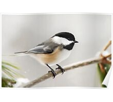 Winter Chickadee Art Painting Poster