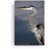 Bradenton Great Blue Heron Canvas Print