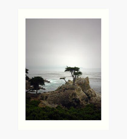 Lone Cypress Art Print