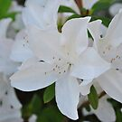 White Wedding Flowers by Bill Colman