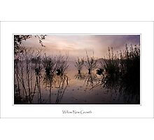 Willow New Growth, Petersfield Photographic Print