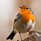 Small BIRDS!