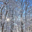 Winter Woods by JGetsinger