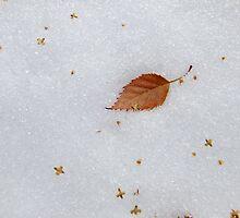 Last leaf by Themis