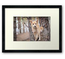 Portrait of a dog. Framed Print