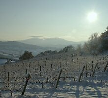Snowy Vineyard by marens