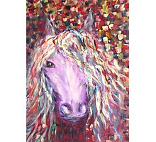 Rainbow Horse  Photographic Print