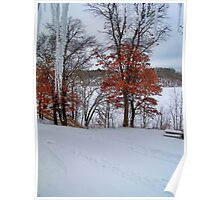Icicles and Orange Trees Poster
