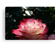 Spokane Rose Garden #1 Canvas Print