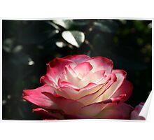 Spokane Rose Garden #1 Poster