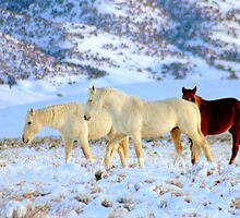 Walking With Wild Horses  by Jeanne  Nations