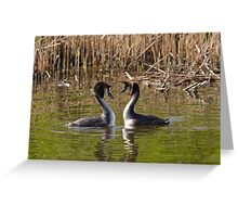 2 Love Great Crested Grebe Greeting Card