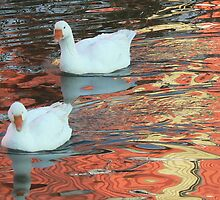 two geese in ripples by LisaBeth