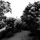Trees covered in snow by rkdownton
