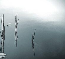 Silence at Lake MacDonald by Nicole Barnes