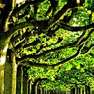 Sunny Tree Crowns by TCL-Cologne