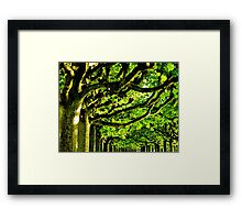 Sunny Tree Crowns Framed Print
