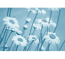 Daisies in Blue #2 Photographic Print