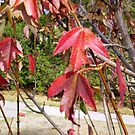 Last leaves to fall, Autumn 2010 by EdsMum