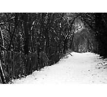 Winter's Trail Photographic Print